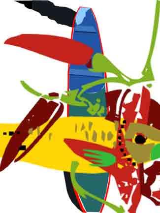Canoa tricolor/digitali